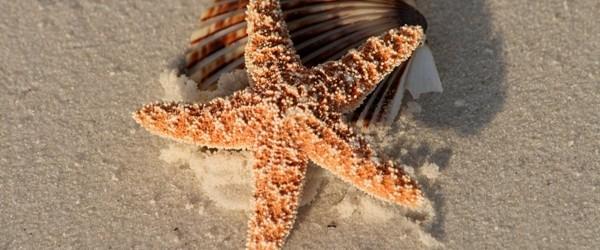 starfish jpg